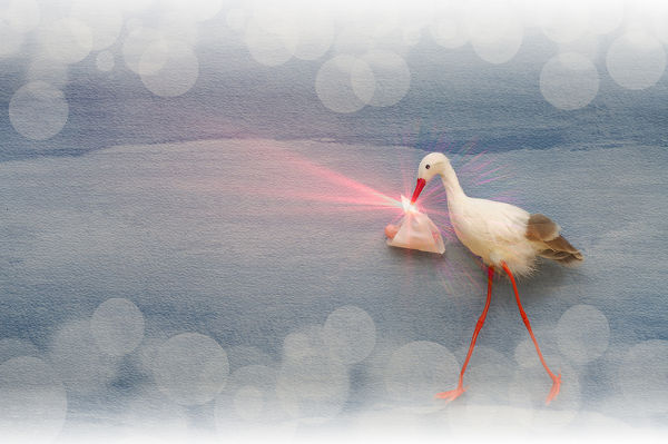 Stork delivering baby blured background and lens flare