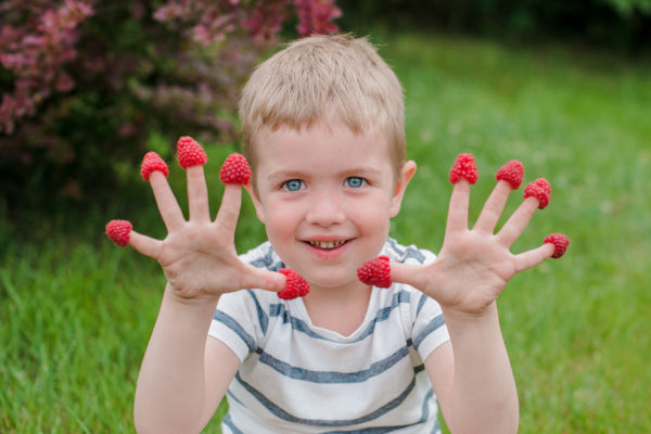 Child picking raspberries and putting them on his fingers